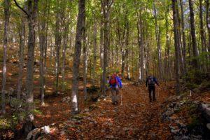 Trail Forest Trekking Autumn Excursion